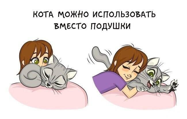 7 причин почему кот лижет стены и пол - kotiko.ru