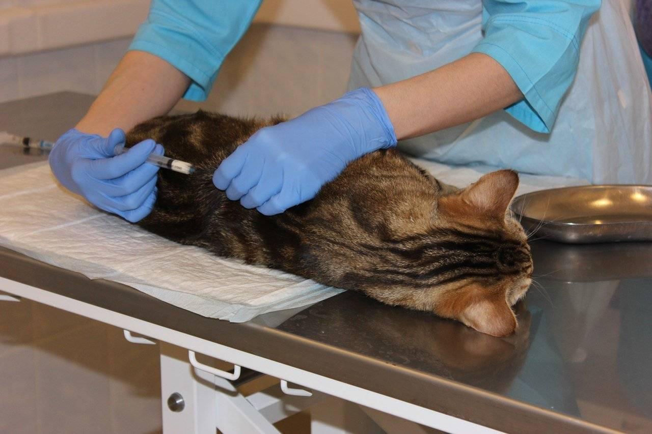 Можно ли кошкам рыбу - польза и вред - kotiko.ru