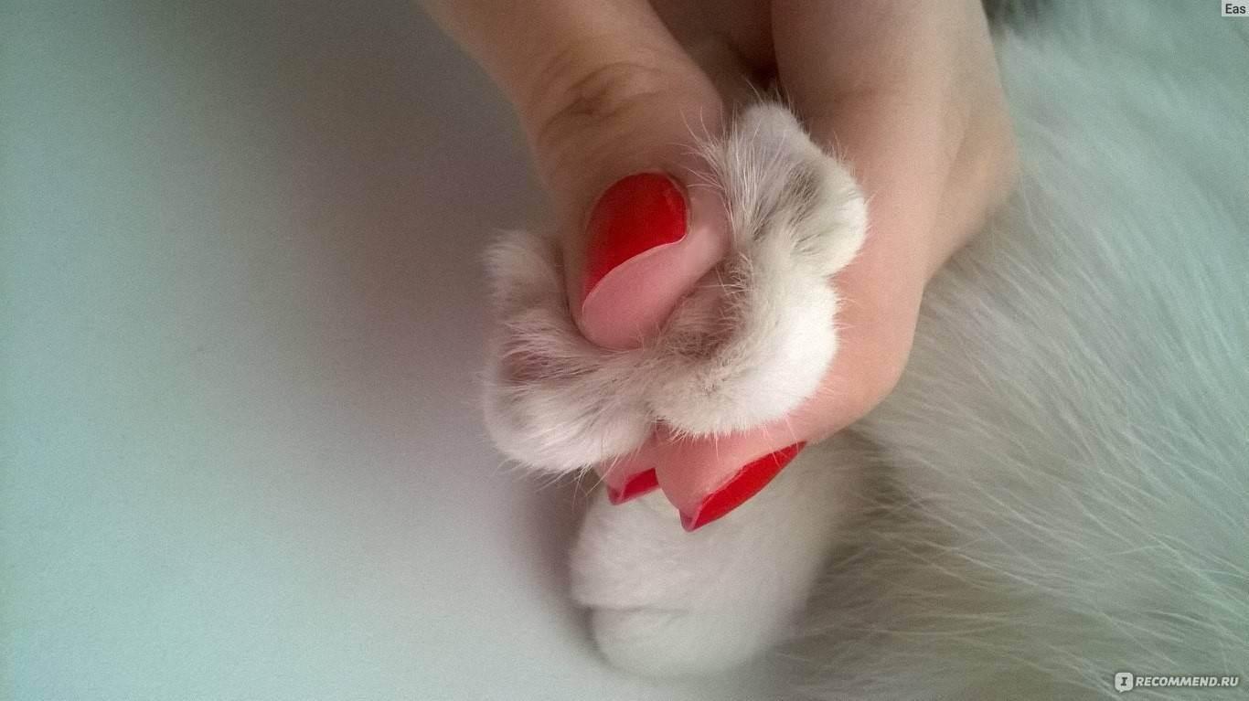 Мягкие лапки любимой кошке...
