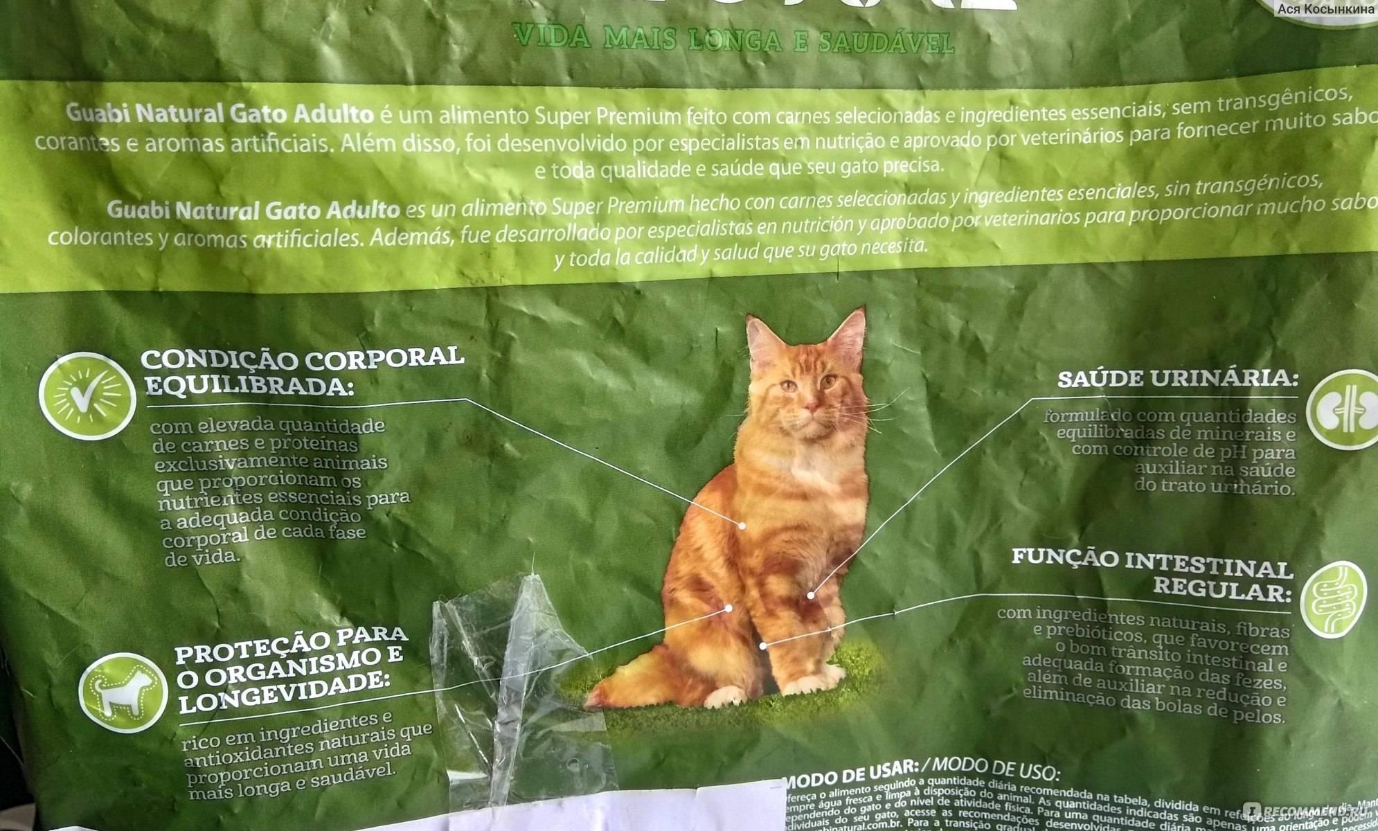 Сухой и влажный корм для котят — какой лучше?