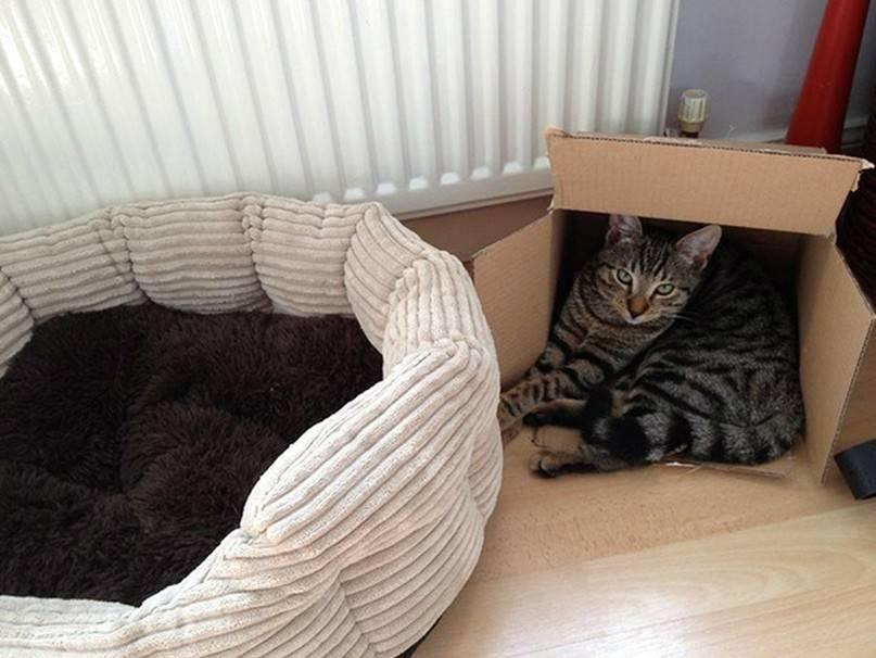 Как приучить кота спать с хозяином и возможно ли это