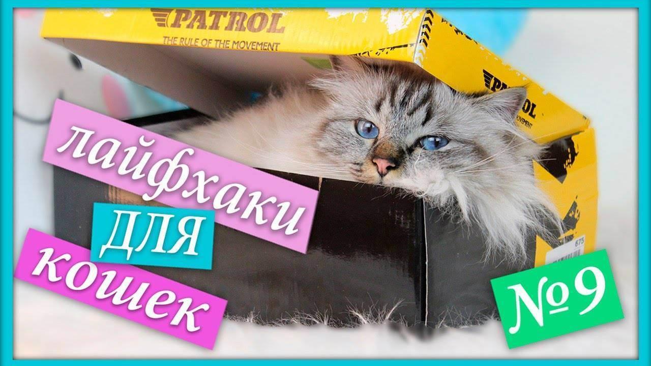 Полезные лайфхаки для кошек и котов