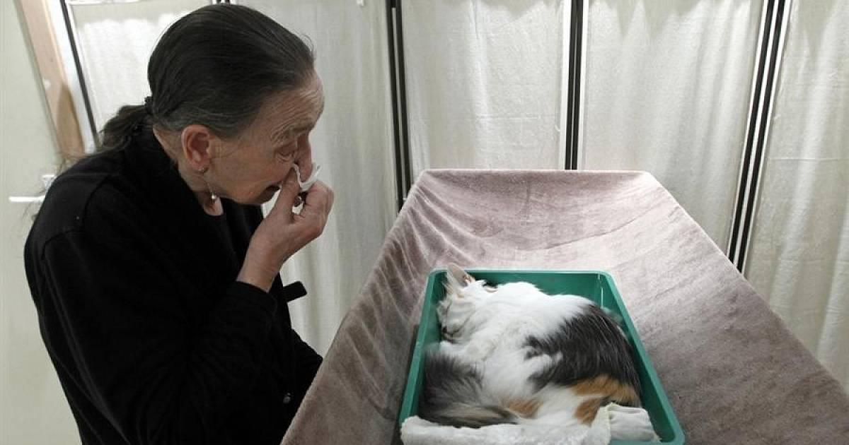 Как правильно похоронить кошку?