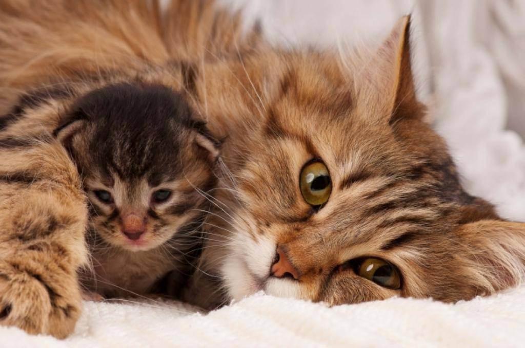 Как помочь кошке при родах в домашних условиях если она не может родить