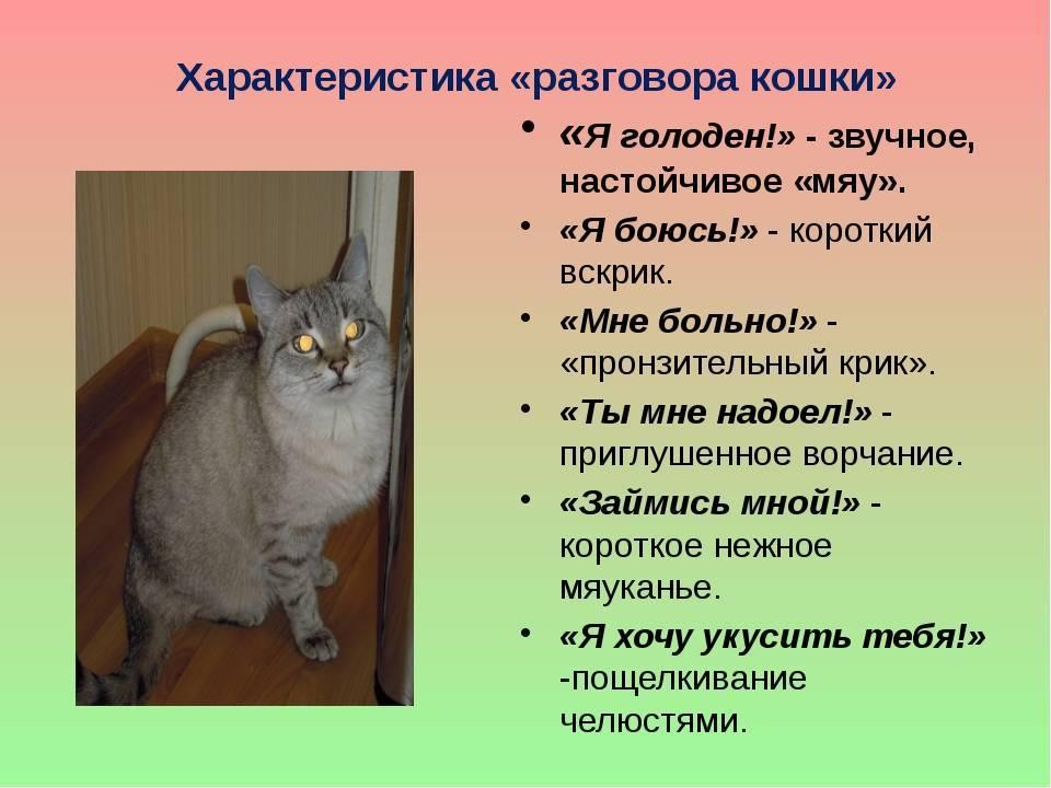 Кот вернулся домой примета. народные поверья и приметы о мистике кошек