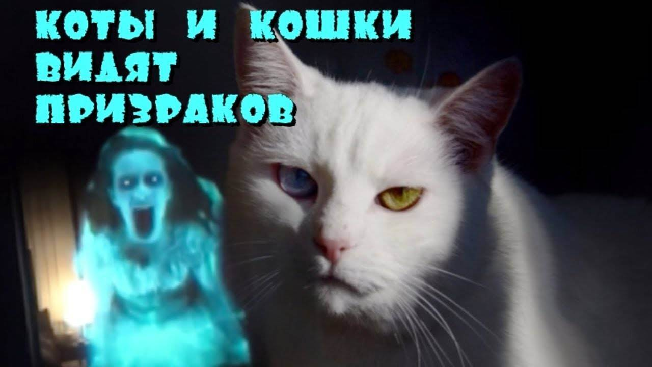 Что видят коты, чего не видим мы? коты и нечисть, дух кота в квартире