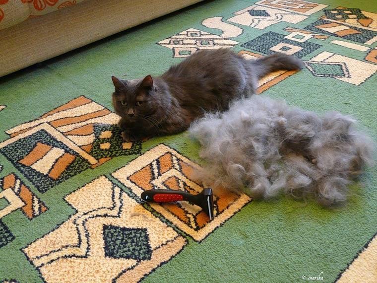 Почему у кошки выпадает шерсть и что делать при постоянной линьке