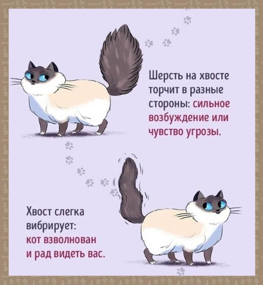 Как правильно вязать кошек в первый раз?