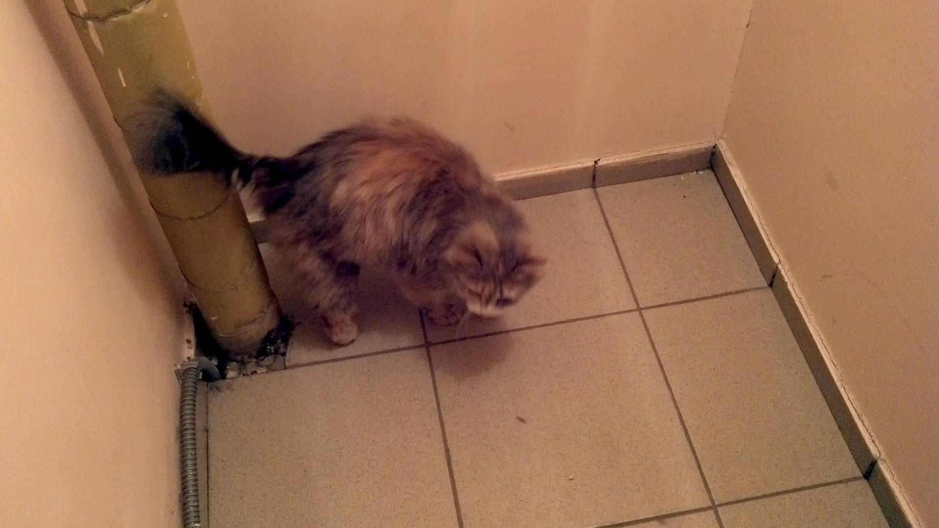 Как отучить кошек гадить в подъезде: рекомендации, советы, правила