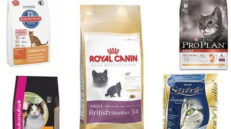 Что такое холистик корм и чем он полезен для кошек