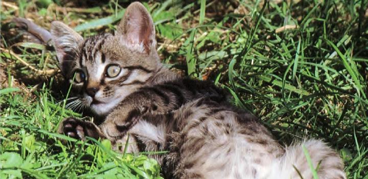 Когда у котят меняются зубы - как обеспечить надлежащий уход?