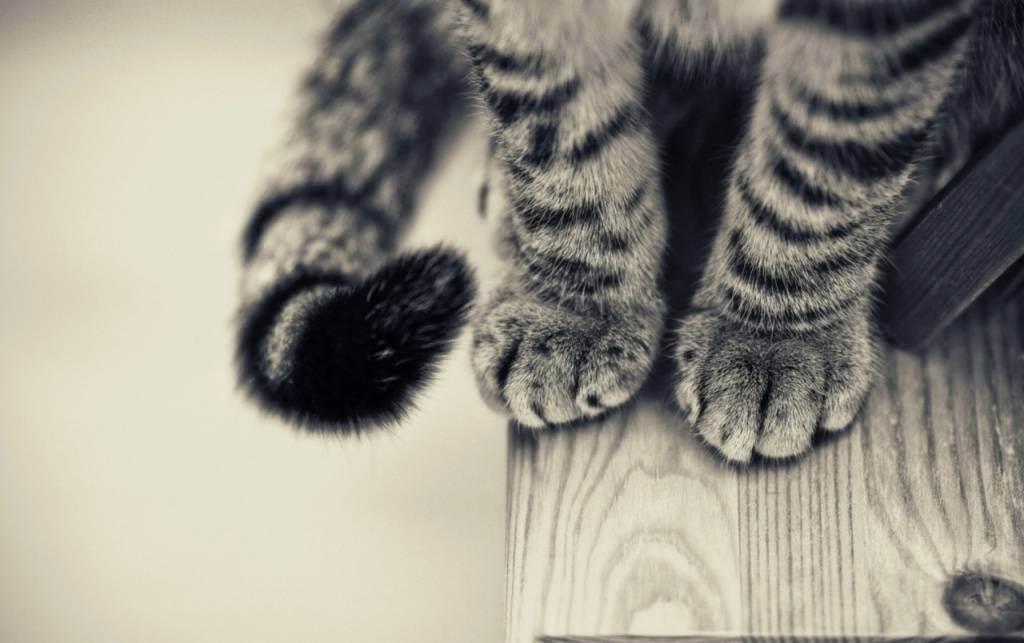Как заставить кошку пить больше воды