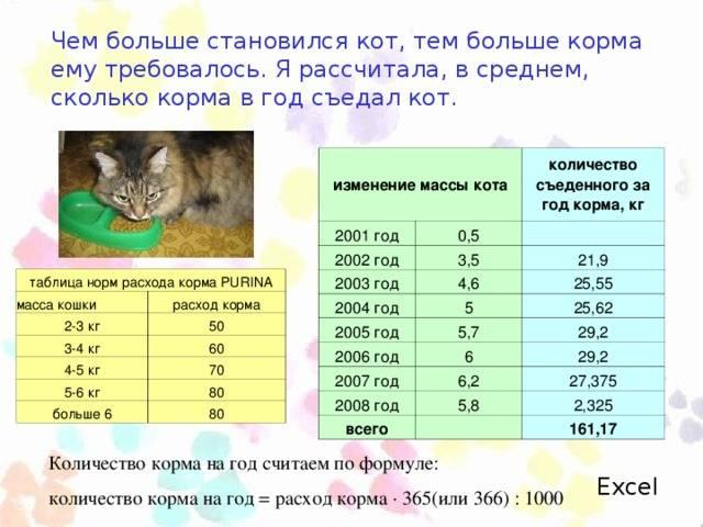 Сколько должна весить стерилизованная кошка. сколько весит взрослая кошка? отклонение веса от должного и его влияние на здоровье