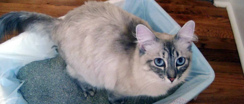 Кошка не ходит в туалет по-маленькому, пьет мало воды: причины задержки мочеиспускания на 2–3 дня