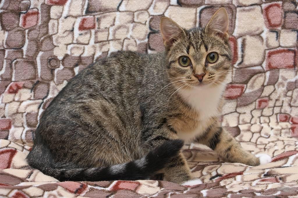 Окрасы кошек подробно » kuguarlend