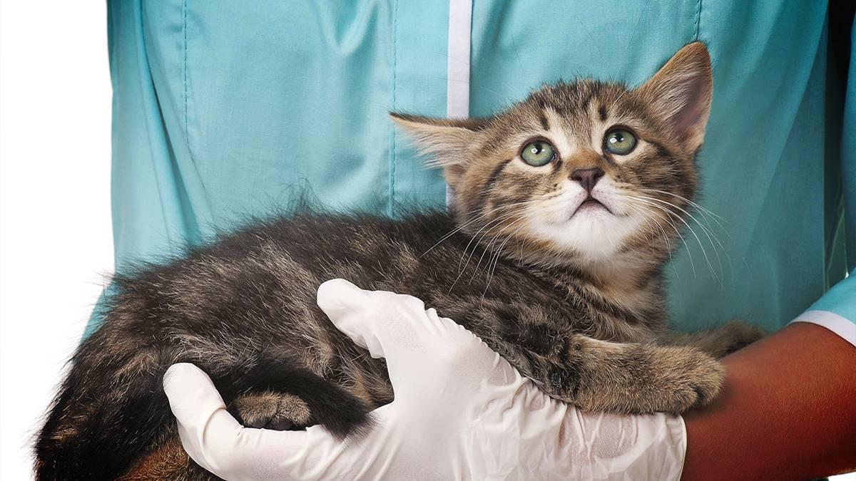 Что делать если у кошек сальмонеллез - oozoo.ru