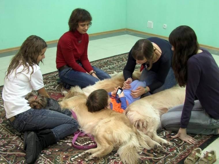 Medweb - анималотерапия: общение с животными как лекарство
