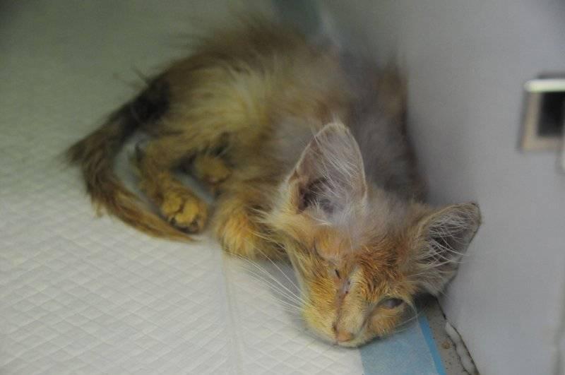 Сальмонеллез у кошек: симптомы и лечение | как лечить
