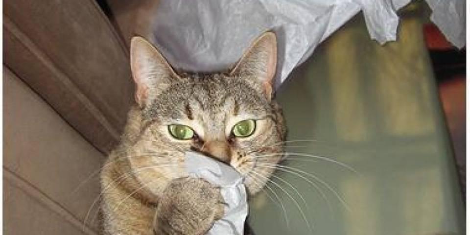 Почему возникает насморк у кошек и как эффективно его устранить