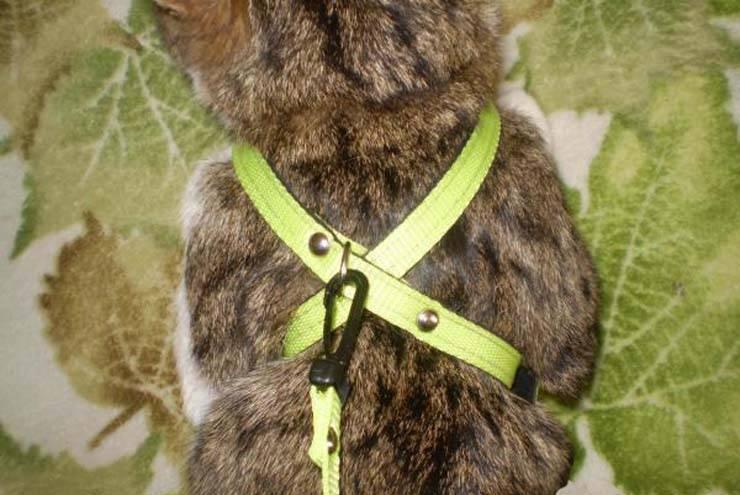 Как правильно одеть шлейку на кошку: пошаговое фото