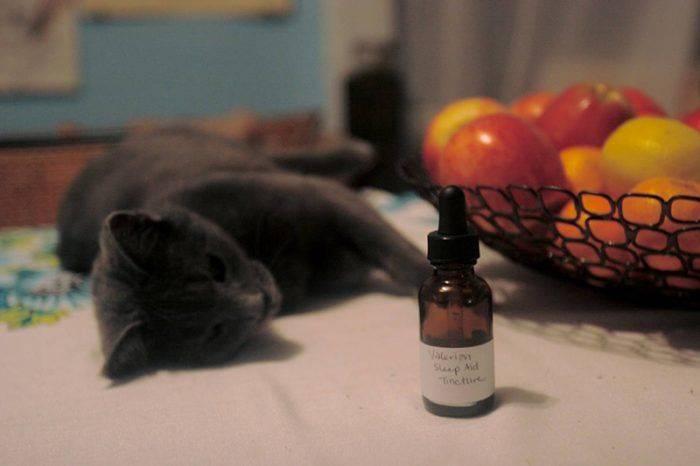 Чем привлекательна валерьянка для кошек: польза и вред «успокаивающей» травы