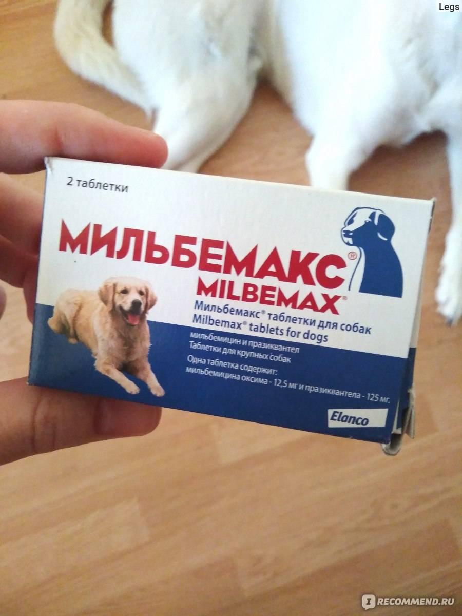 За сколько дней до прививки давать глистогонное кошке, обязательно ли нужно глистогонить?