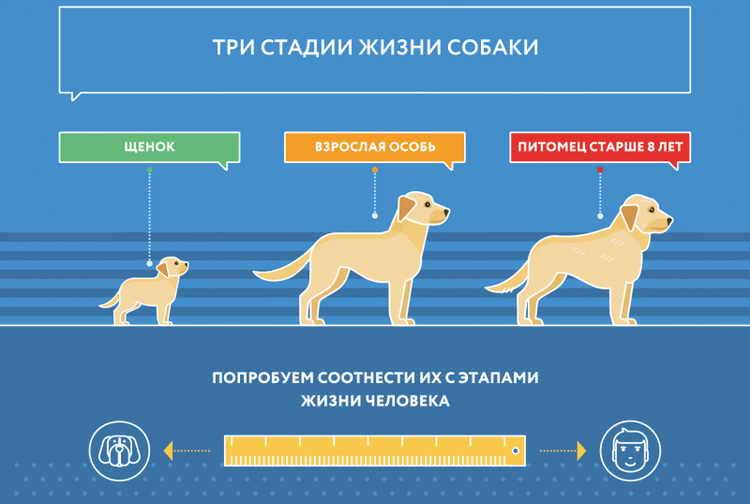 Продолжительность жизни кавказской овчарки: как определить возраст питомца и какой уход за ним требуется
