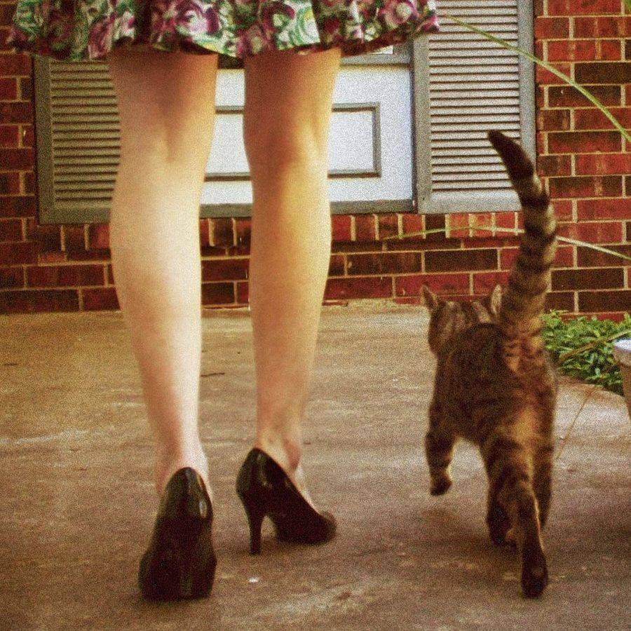 Кошка лижет руки своим хозяевам: размышляем об основных причинах