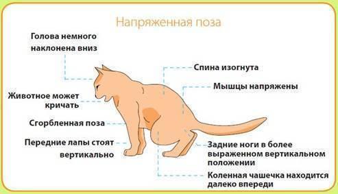 Болезни кошек: симптомы и способы лечения