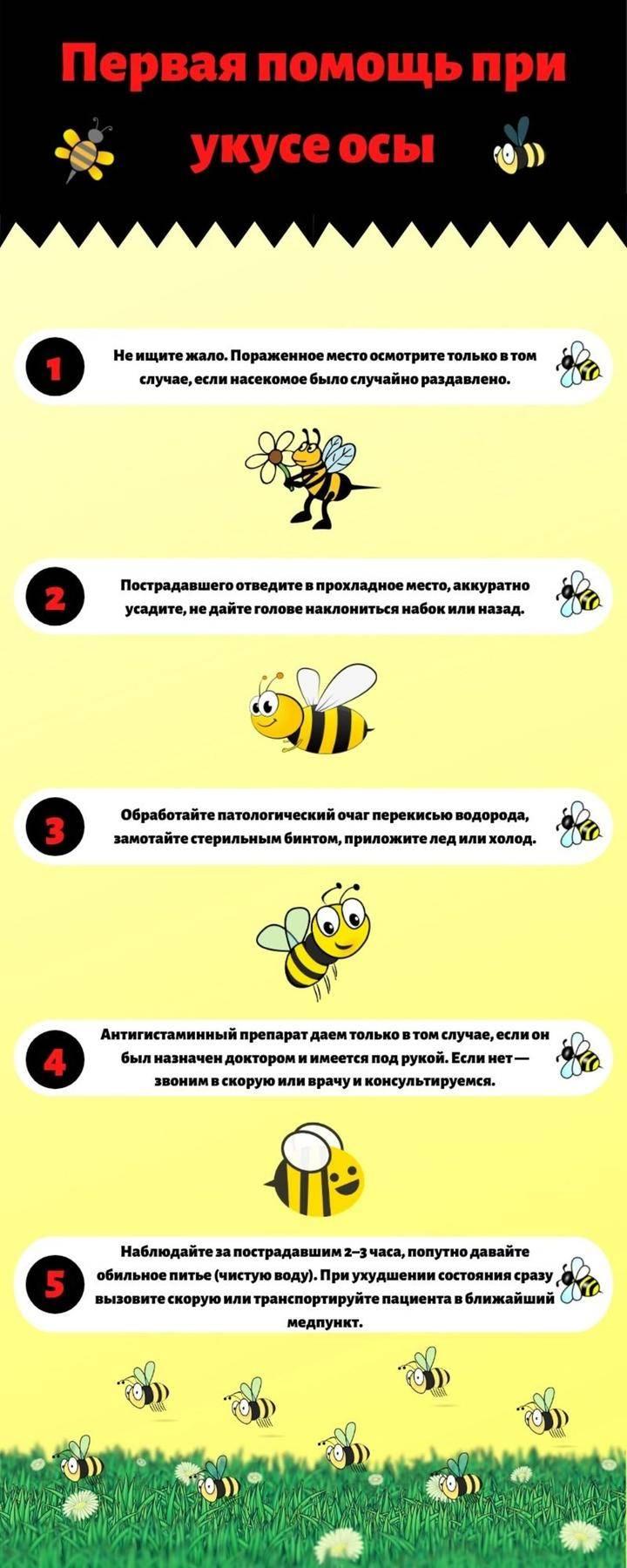 Кота укусила оса — что делать? 6 общих симптомов