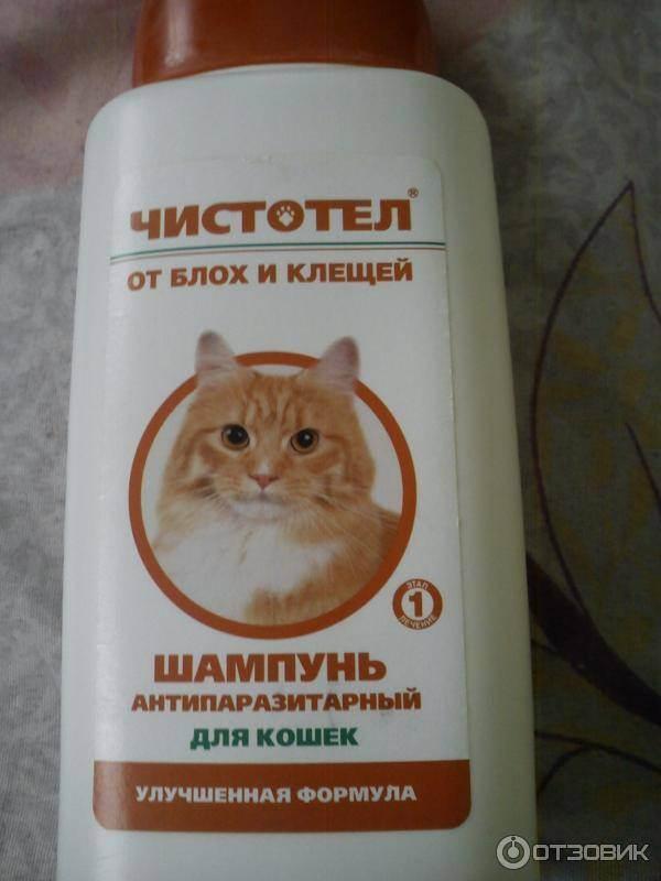 Шампуни от блох для кошек и котят: инструкция по применению, советы и отзывы