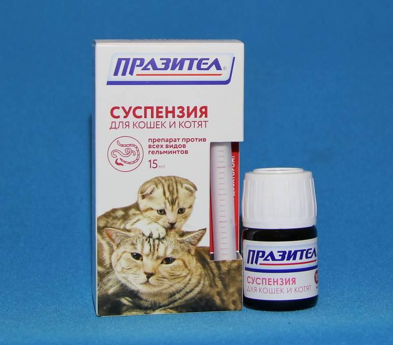 Таблетки от глистов для кошек - описание препаратов