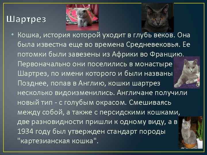 Картезианские кошки—национальное достояние франции
