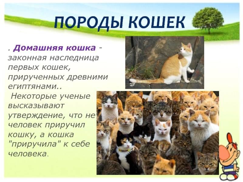 Домашние кошки: история одомашнивания