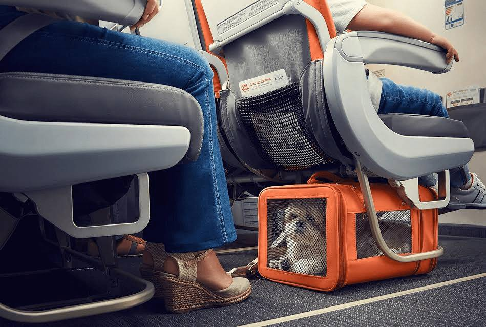 Как правильно перевозить кошек в самолете   кот и кошка