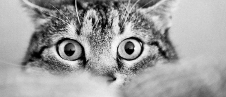 Котенок не пьет воду. что делать?