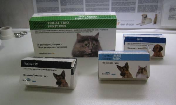 Какие прививки делают котятам и в каком возрасте: и от чего