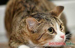 Отравление у кота