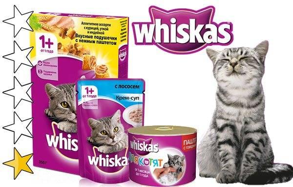 Вискас для котят и взрослых кошек, состав сухого и влажного корма: можно ли кормить им кота?