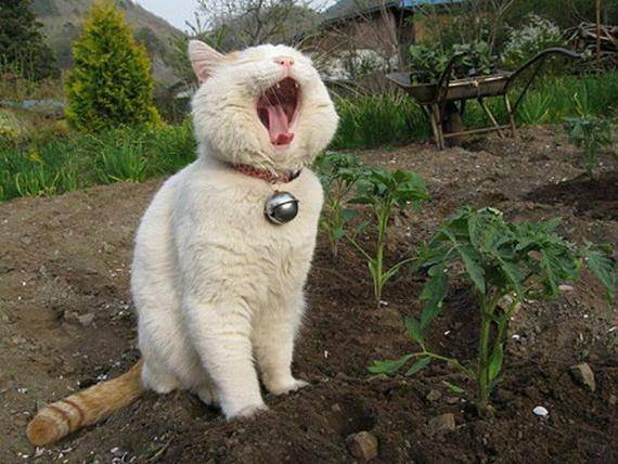 Как отучить кошку гадить в неположенном месте раз и навсегда