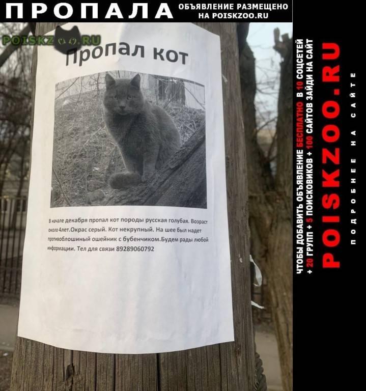 Как найти пропавшего кота, если он потерялся на улице, даче, убежала из дому домашняя кошка