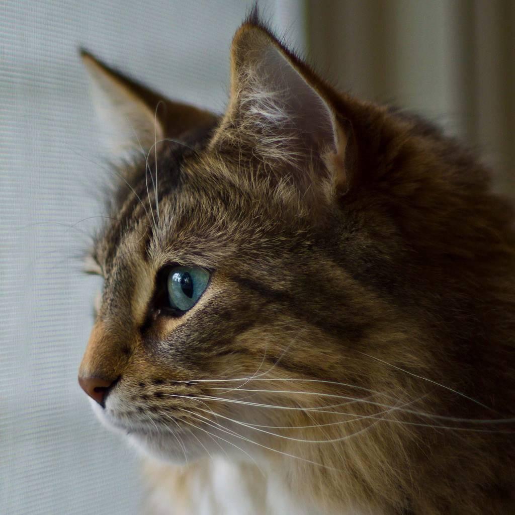 У кошки слезятся глаза коричневые выделения лечение