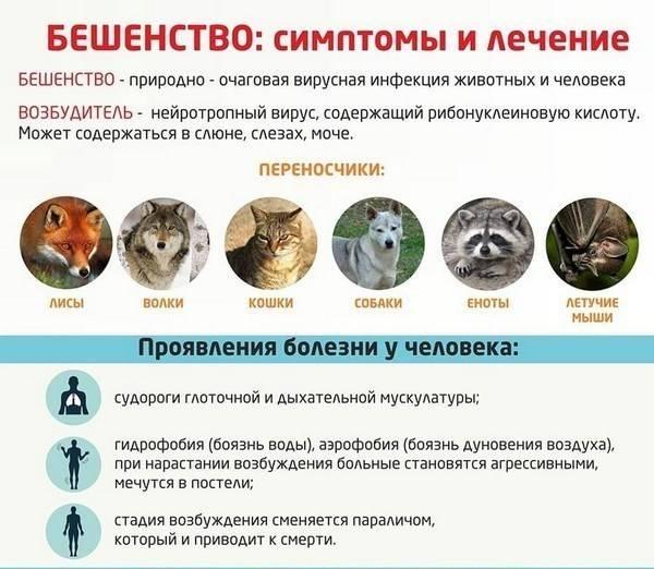 Укус кошки: симптомы, последствия | компетентно о здоровье на ilive