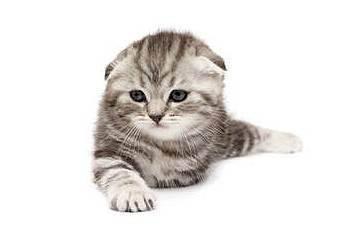 Можно ли кормить кошку только сухим кормом? что делать, если кот ест лишь сухой корм? нормально ли это? мнение ветеринара