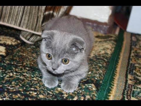 Сколько должен весить котенок: таблица по месяцам