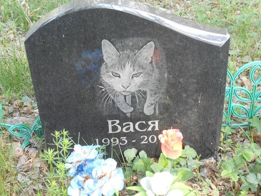 Как правильно похоронить кошку чтобы ей было хорошо