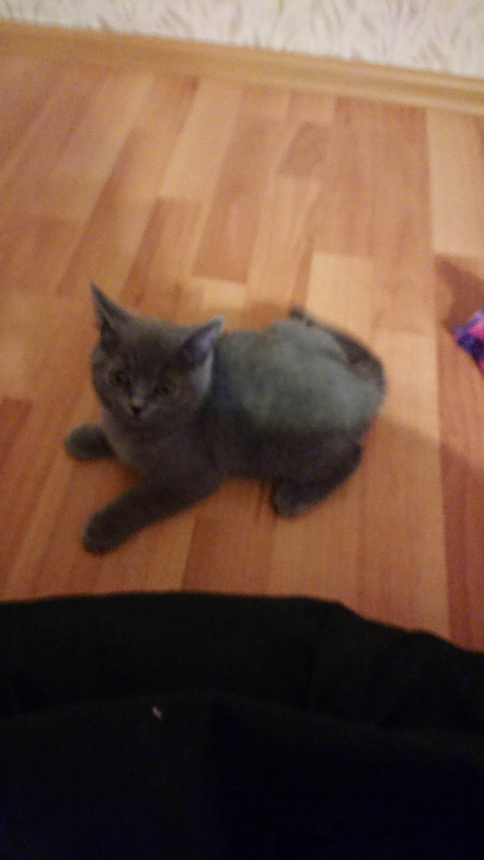 Как быть с подобрашкой? нужен совет! добавила фото кошки.
