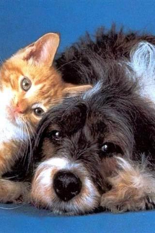 Готовим квартиру к приезду котенка. счастливый кот — la-murmur.ru