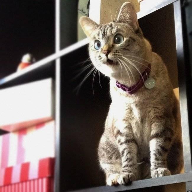 Альтернатива кастрации кота: описание методов их показания и противопоказания