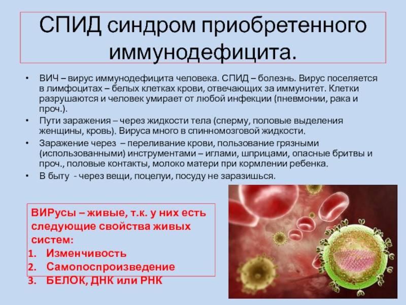 Симптомы и лечение вирусного иммунодефицита у кошек